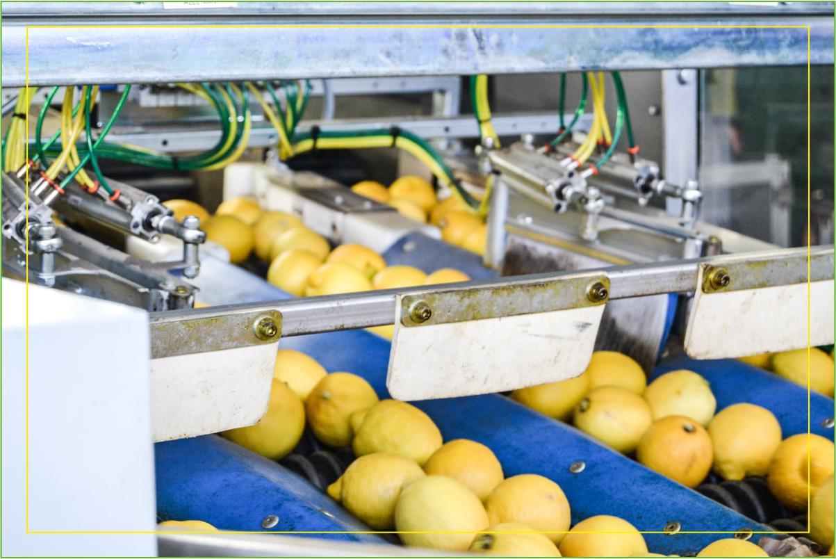Consorzio Apam Torrenova - Selezione Limoni
